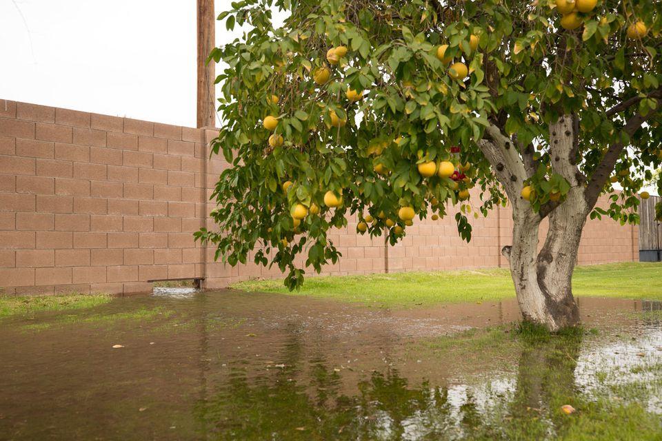 Flooded yard in Phoenix