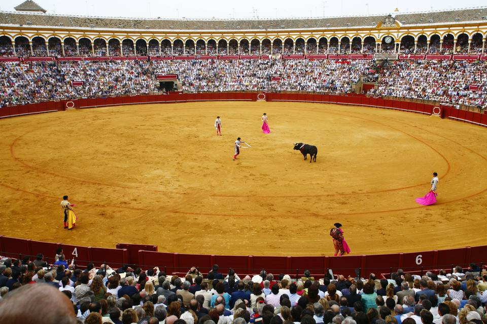 Bull fighting at the Maestranza bullring, Seville, Spain.