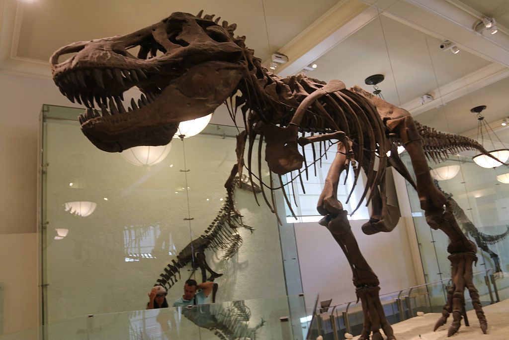 Dinosaur Exhibit at the Museum of Natural History