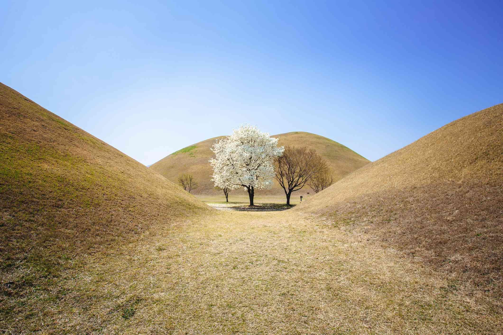 Otherworldly hills in Tumuli Park, Gyeongju, South Korea
