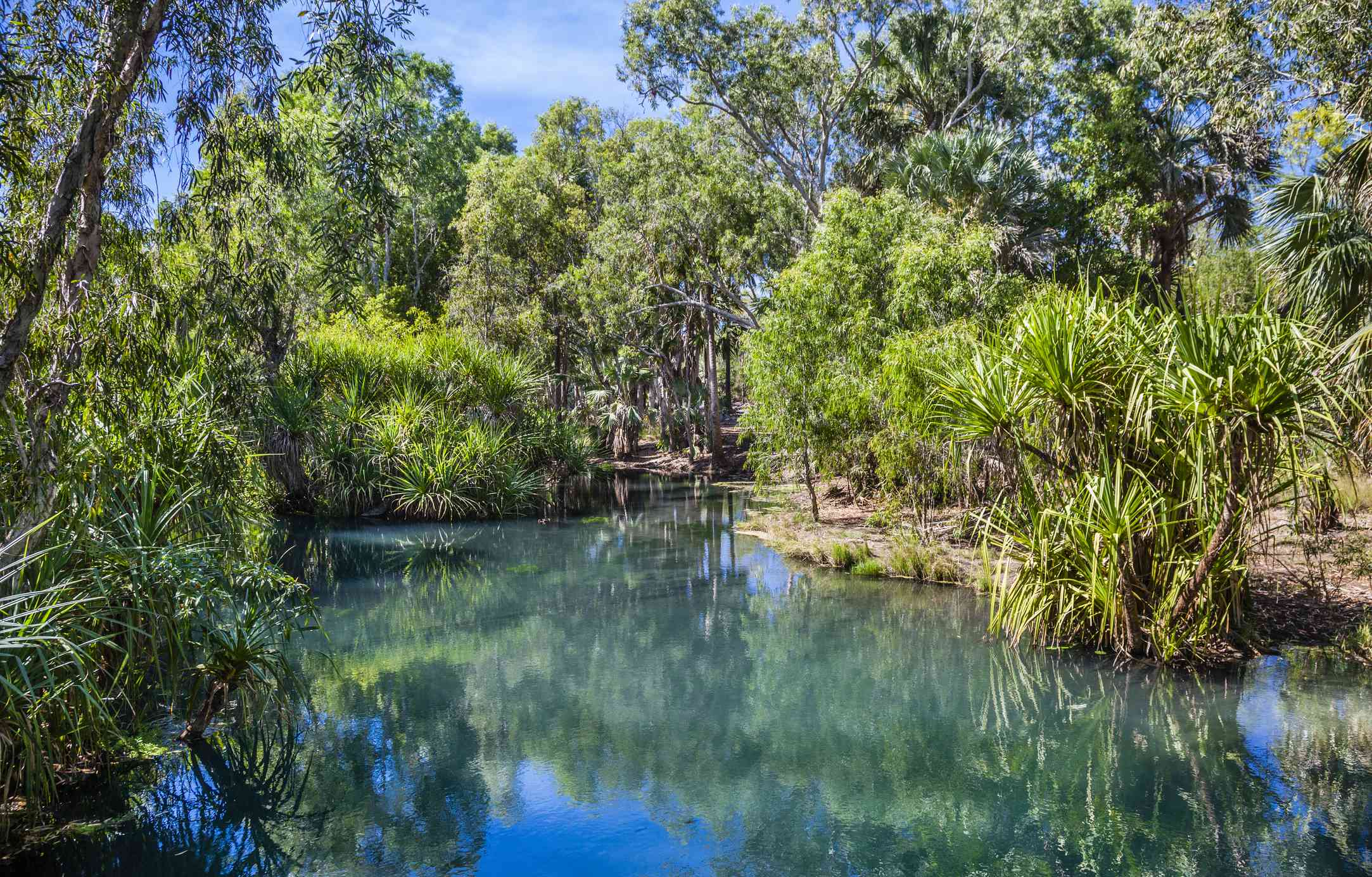 Waterhouse River surrounded by green foliage