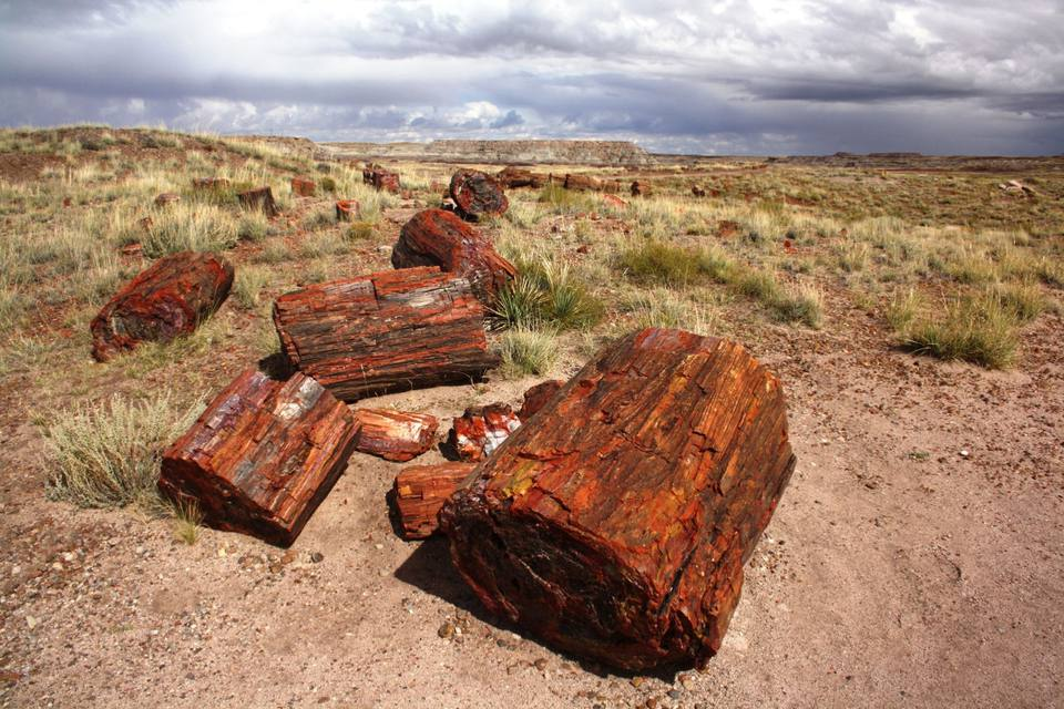 petrified forest natl pk online hookup & dating Ginkgo petrified forest state park is a 7,124-acre park with camping at wanapum recreation area  ginkgo petrified forest is a registered national natural landmark .