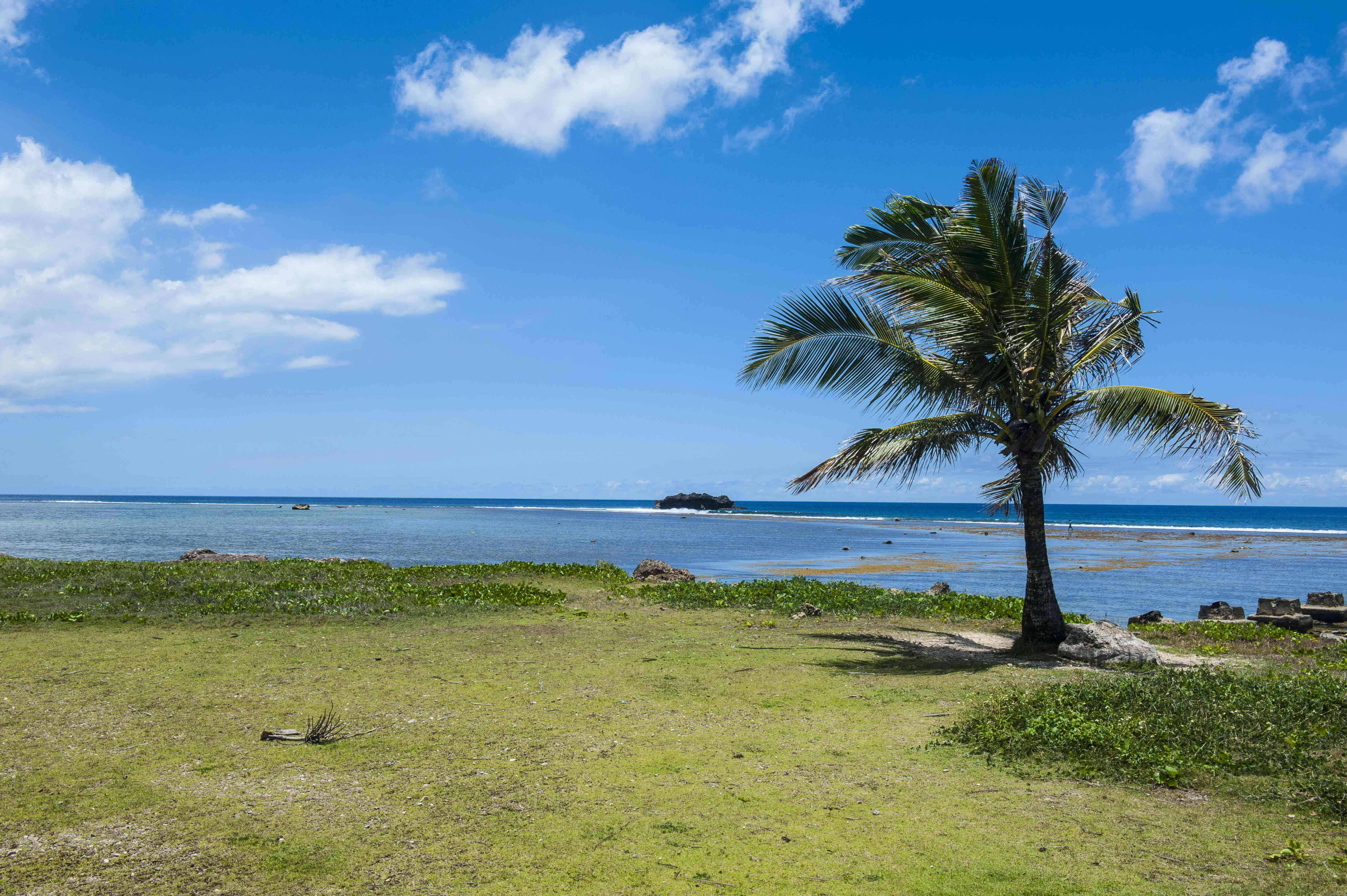 Solitary Palm tree, War in the Pacific National Historical Park, Guam, US Territory, Central Pacific