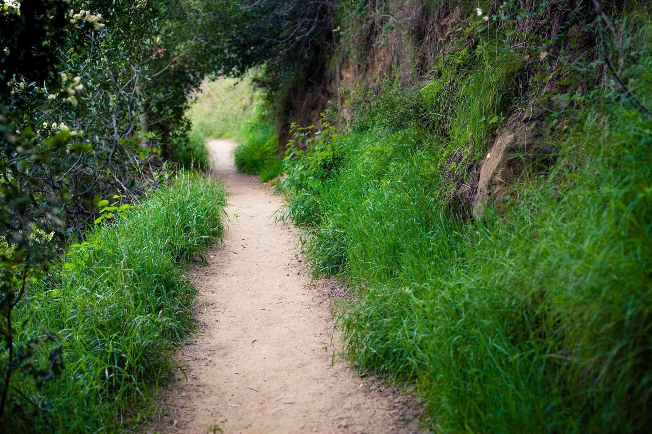 Hiking Trail Temescal Canyon, Santa Monica Mountains