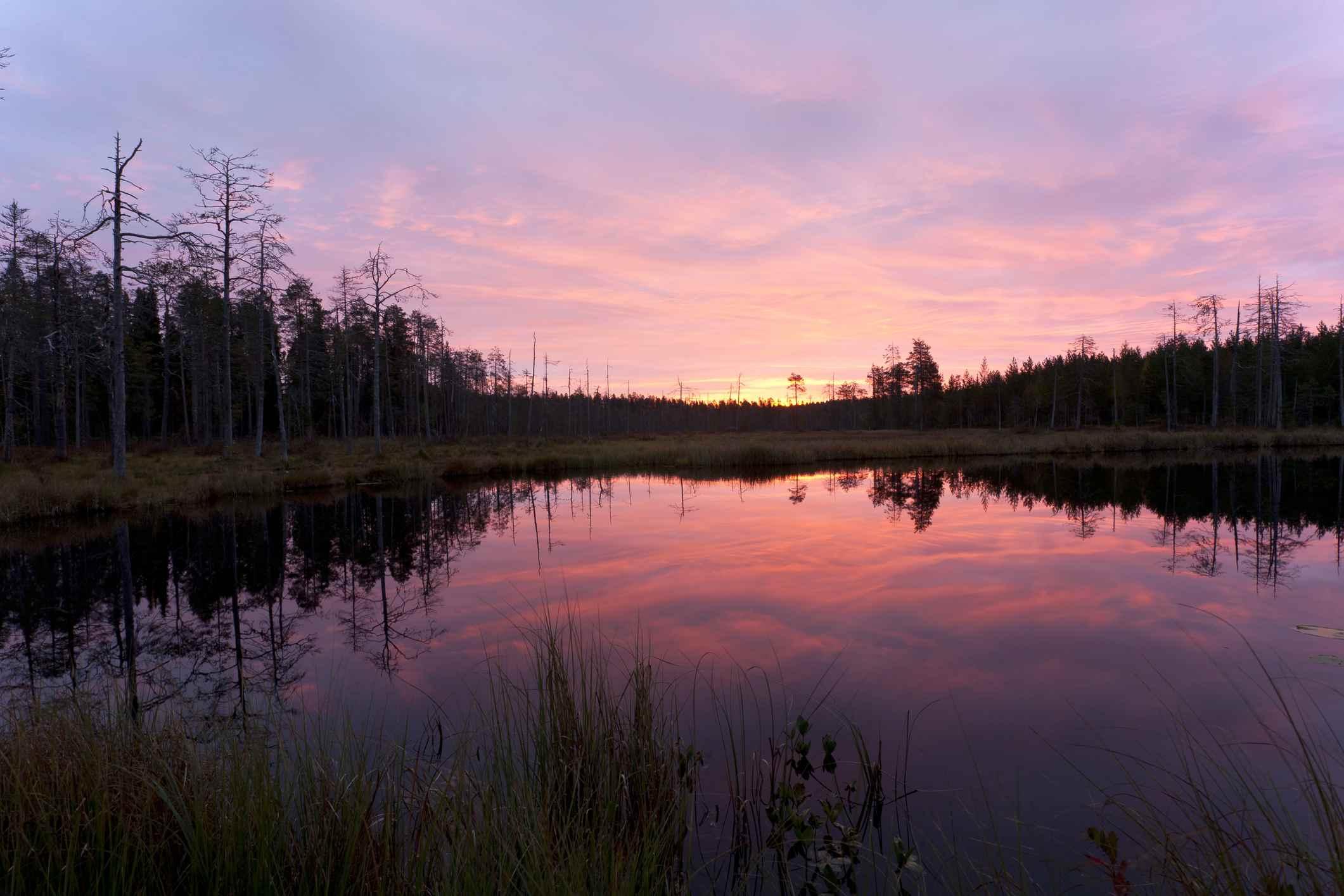 lake in the Taiga at dawn