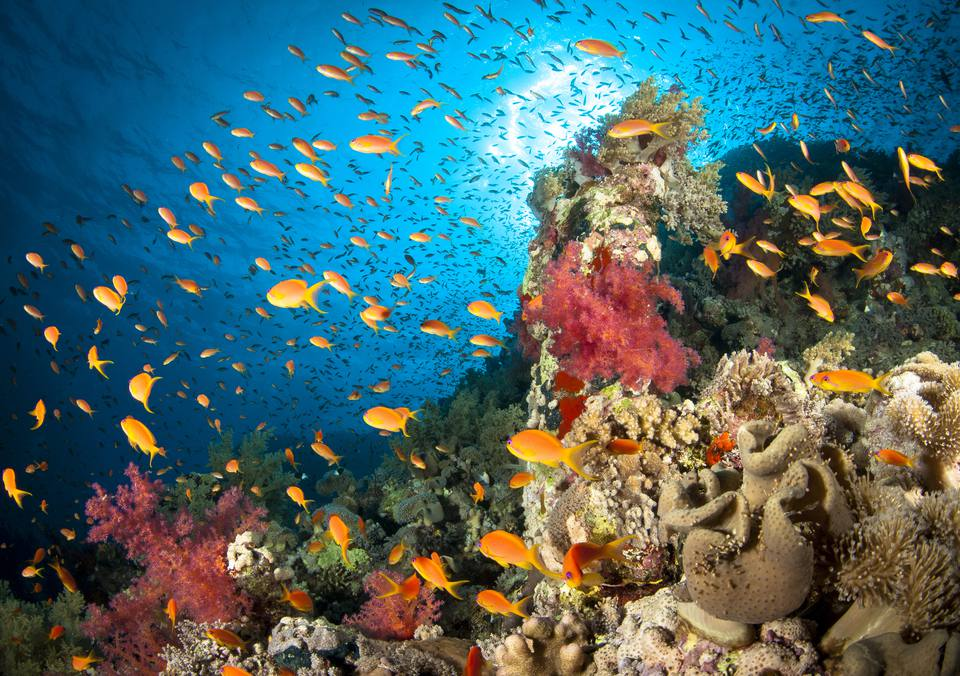 Vibrant Coral Reefs, Red Sea