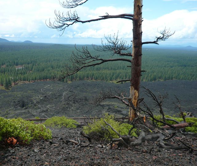View from Lava Butte at Newberry National Volcanic Monument