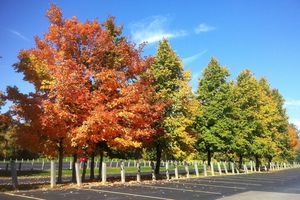 Fall Colors at McClumpha Park in Plymouth Township