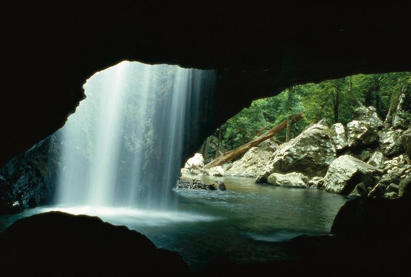 Parque Nacional Springbrook