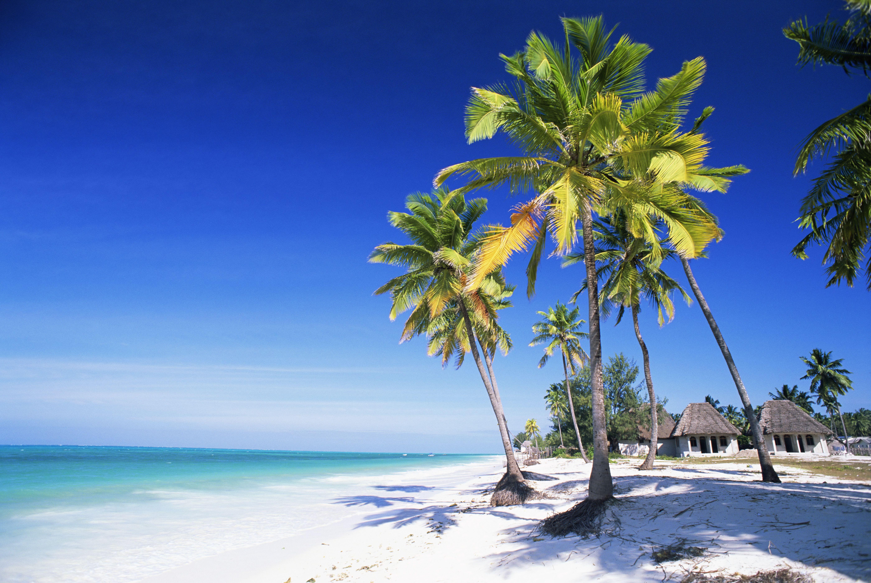 Palm trees, white sandy beach, and the Indian Ocean, Jambiani, island of Zanzibar, Tanzania