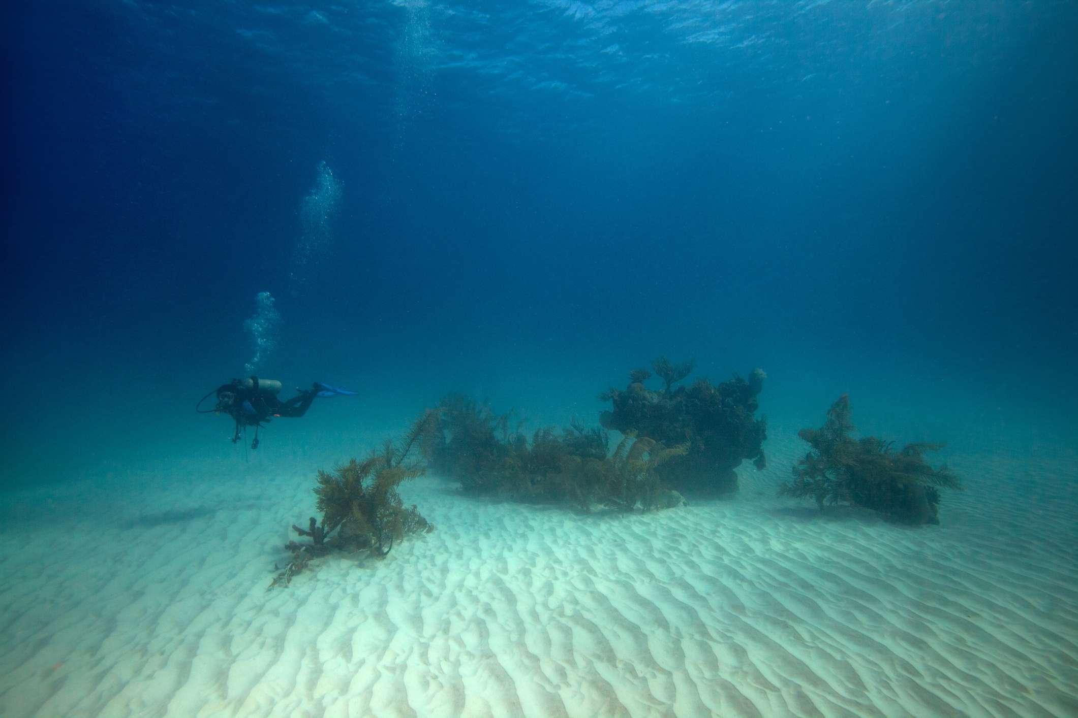 Salt Cay Island
