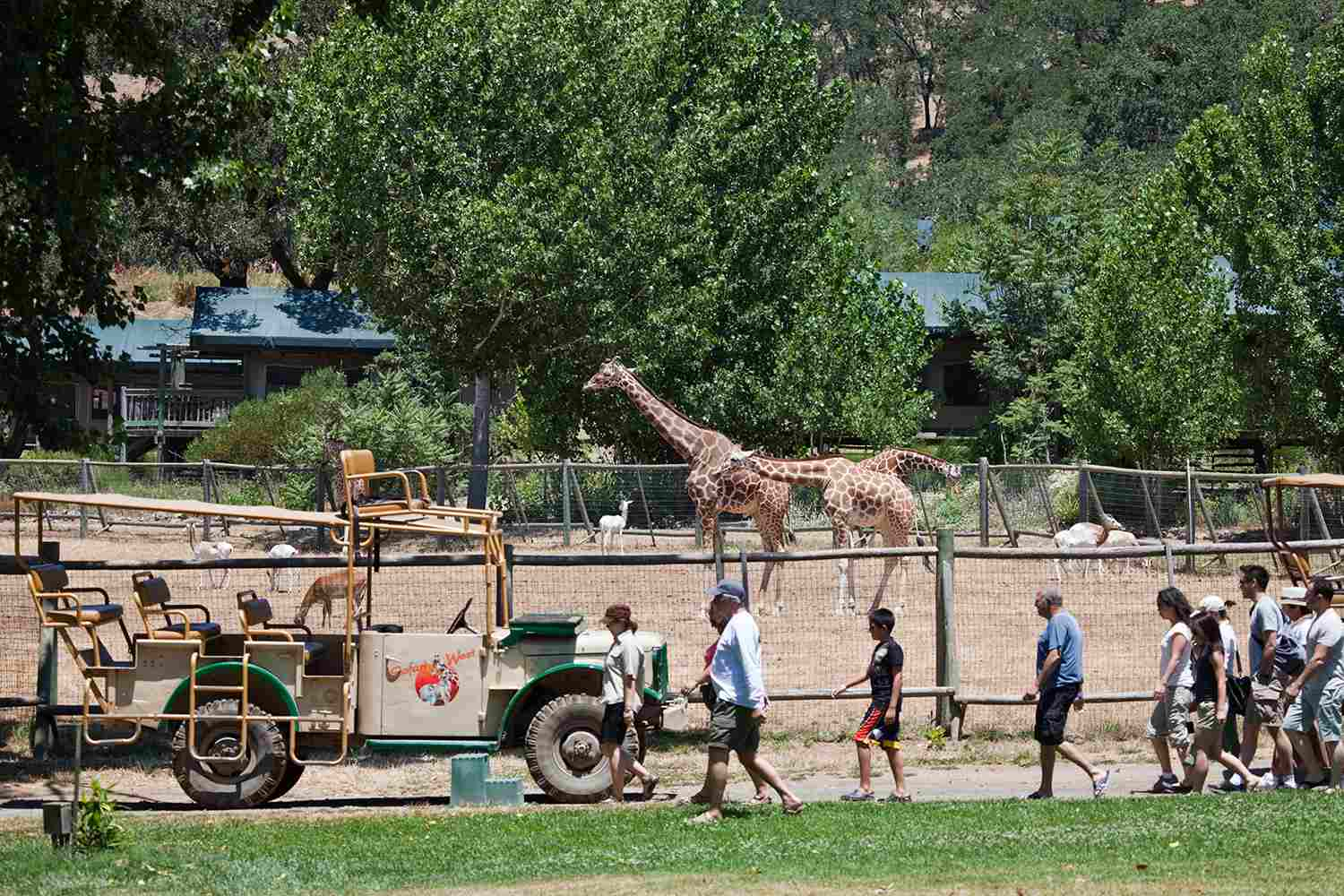Visitors touring Safari West wildlife preserve with giraffes and dama gazelles in background