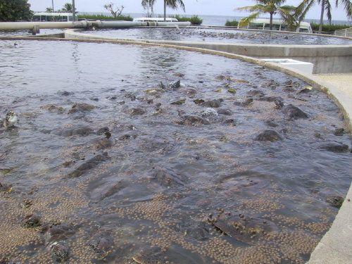 Turtle Farm on Grand Cayman Island