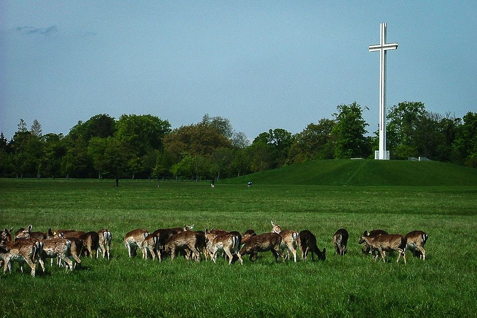 Deer grazing near the Papal Cross in Dublin's Phoenix Park