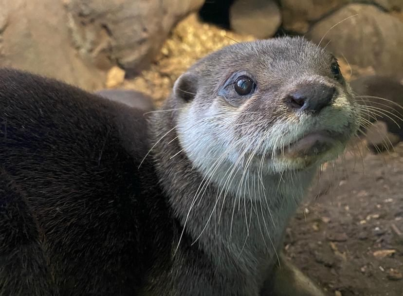 Stan the Otter