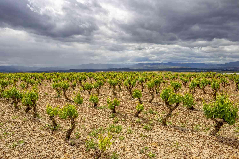 Vineyard in Navarra, Spain