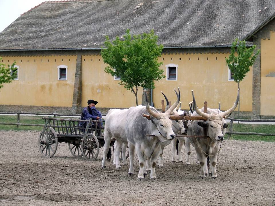 Cattle Wagon at Puszta Equestrian Center