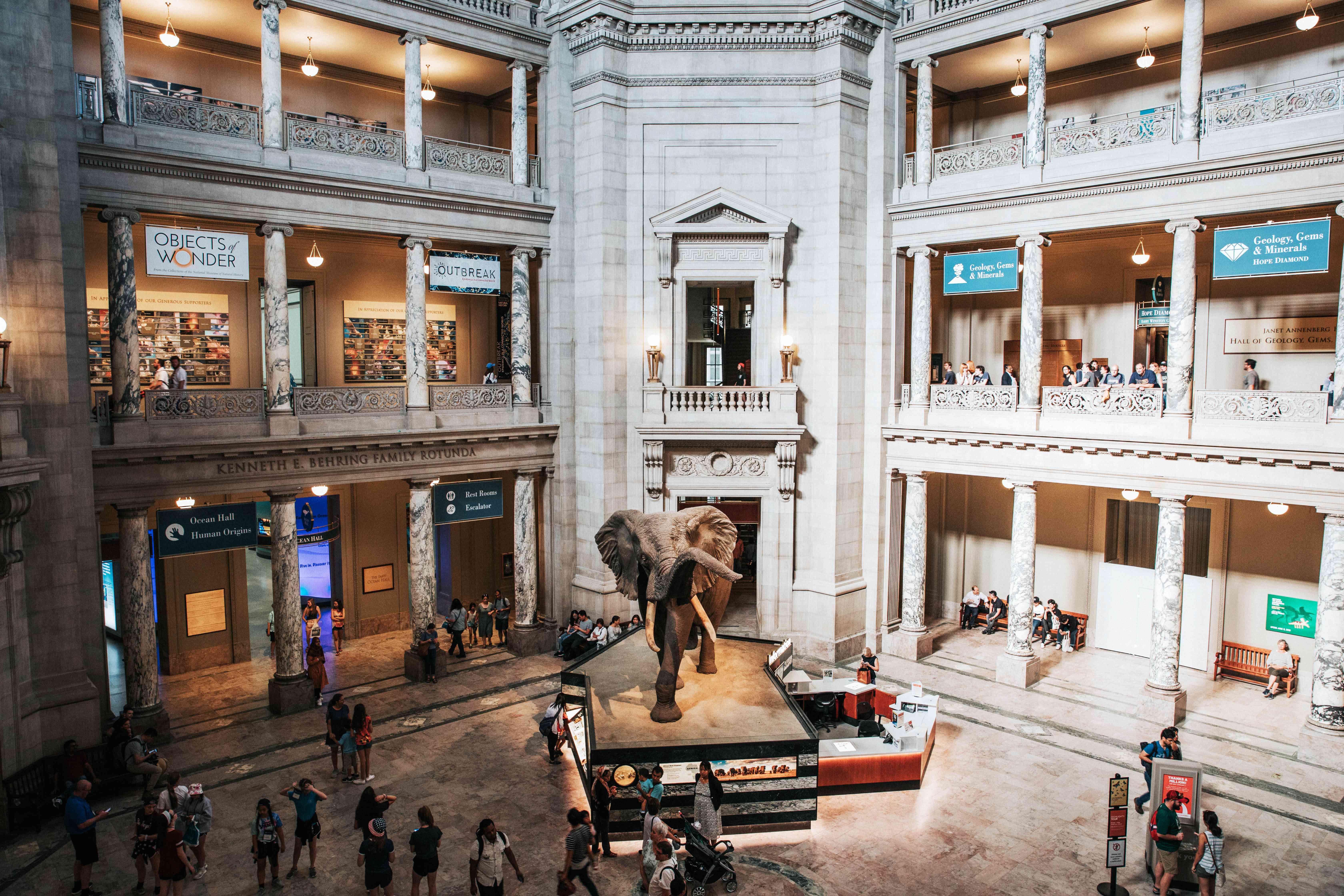 Sala principal del Museo de Historia Natural