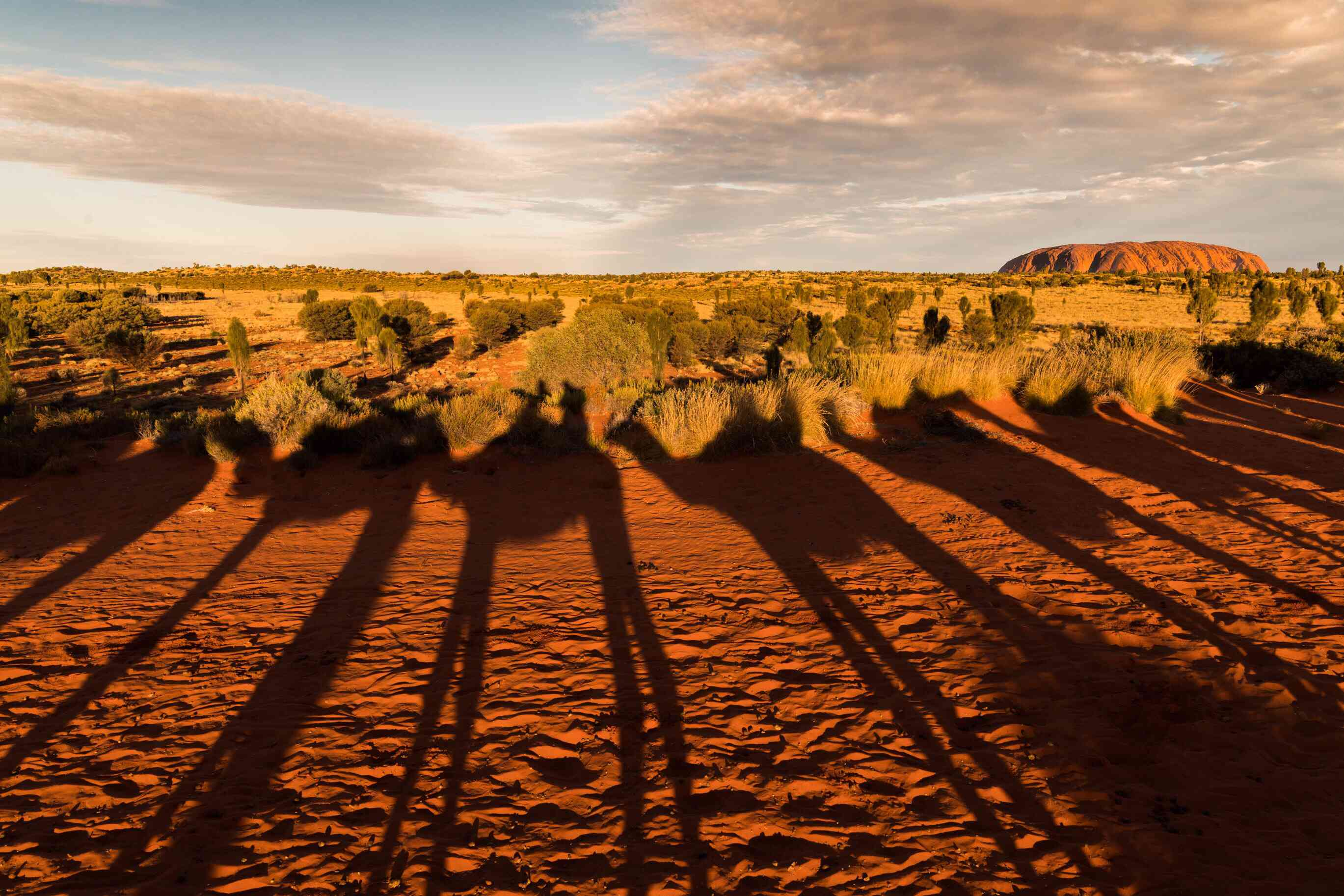 Uluru with shadows of camels in the foreground
