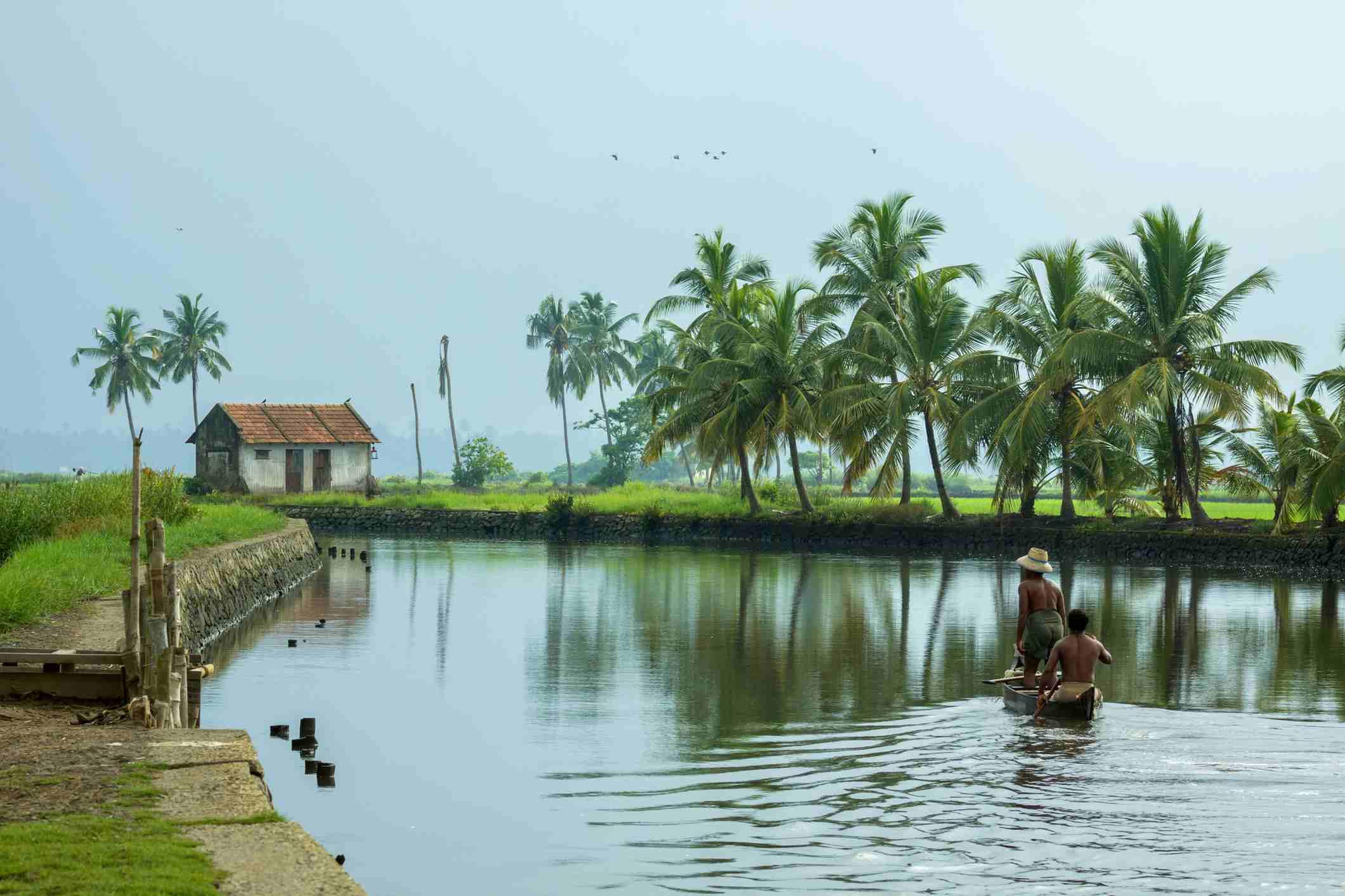Kerala backwater paddy fields.