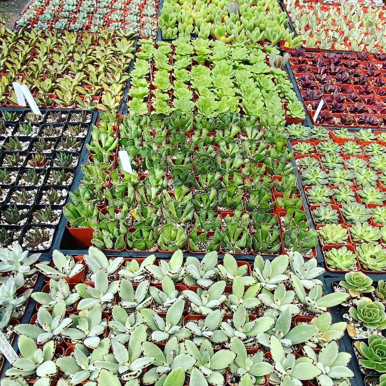 East Austin Succulents