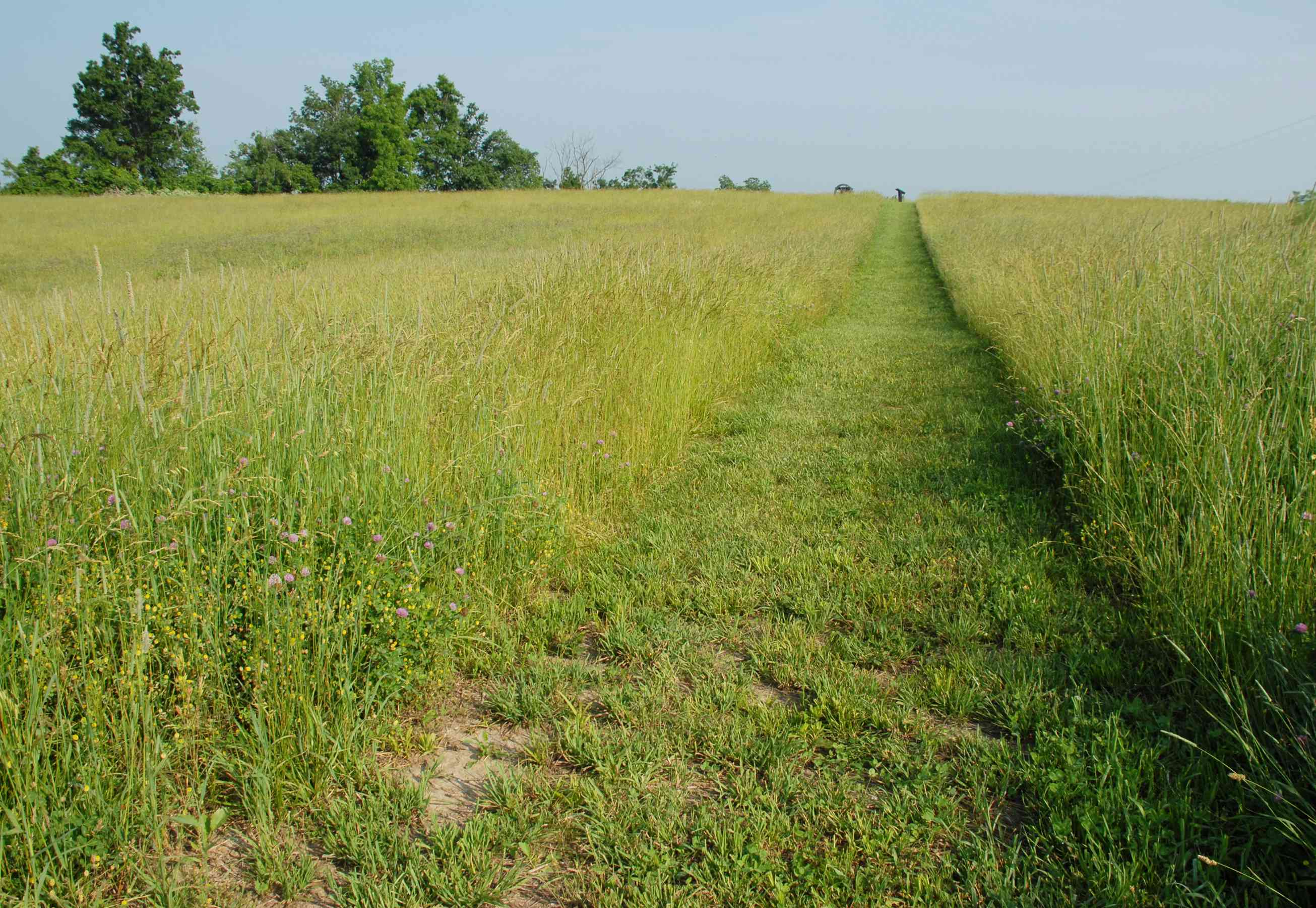 Trail at Perryville Battlefield in Kentucky