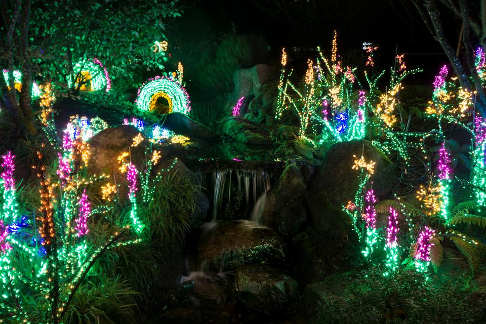 Bellevue Botanical Garden - Best Christmas Lights In Seattle, Tacoma, And Bellevue