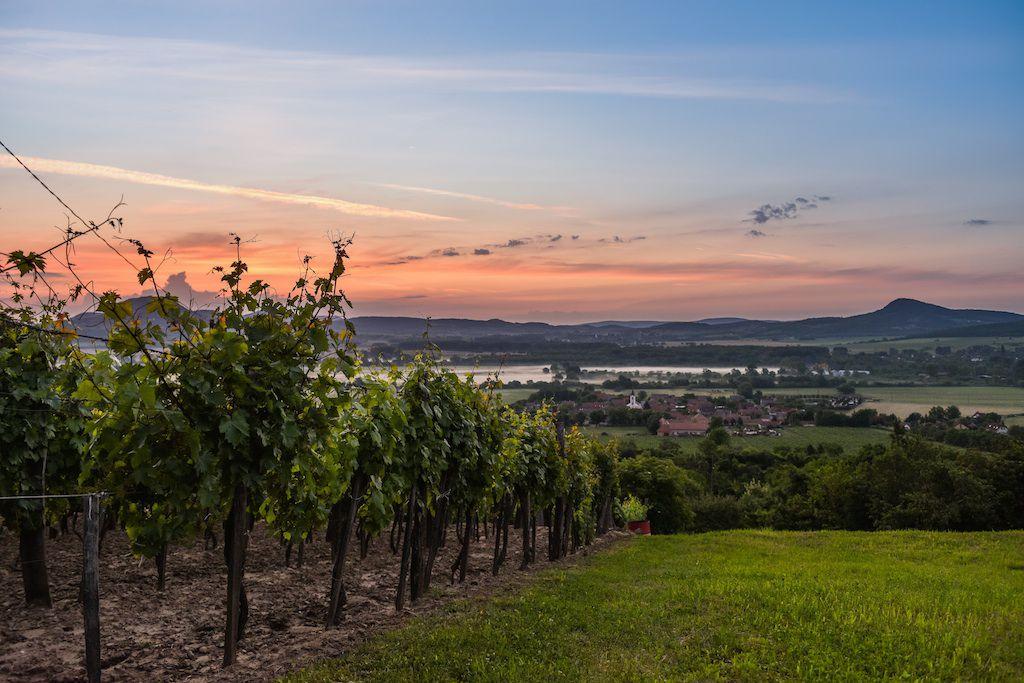 Balaton Vineyards