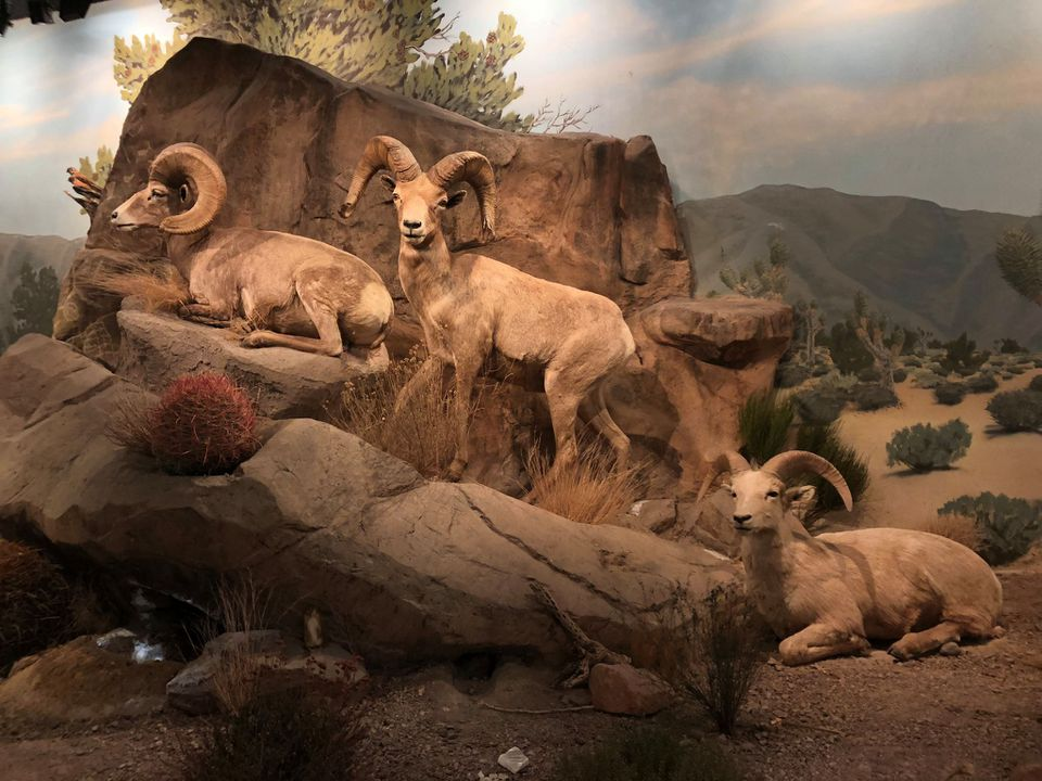 Museo de Historia Natural de Las Vegas