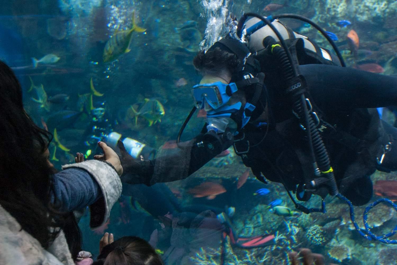 Scuba Diver at Aquarium of the Pacific