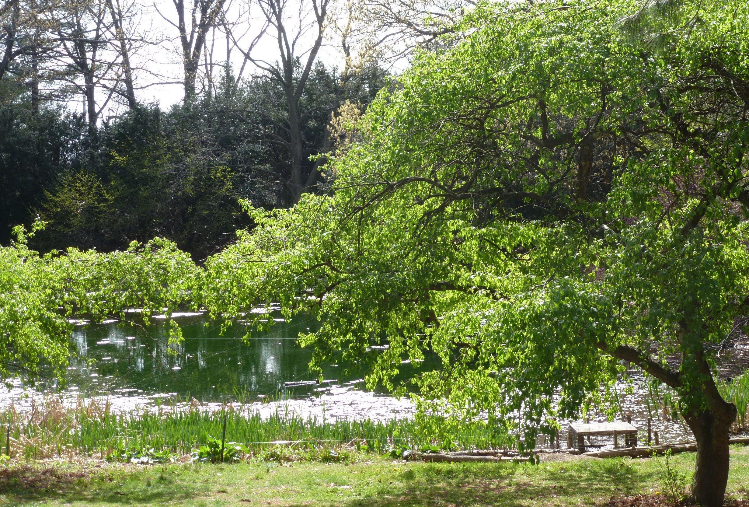 A Photo Overview Of Clark Botanic Garden