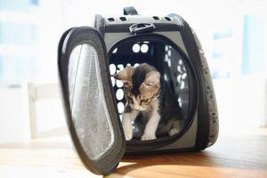 Kitten in a pet carrier - stock photo