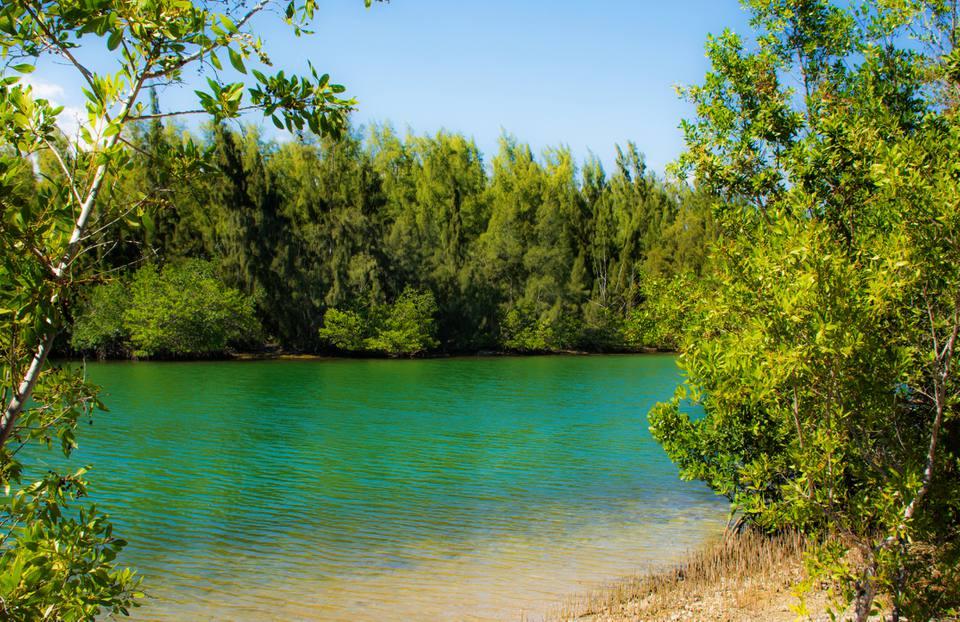 playa y manglares en el parque estatal Oleta River, Miami, Florida