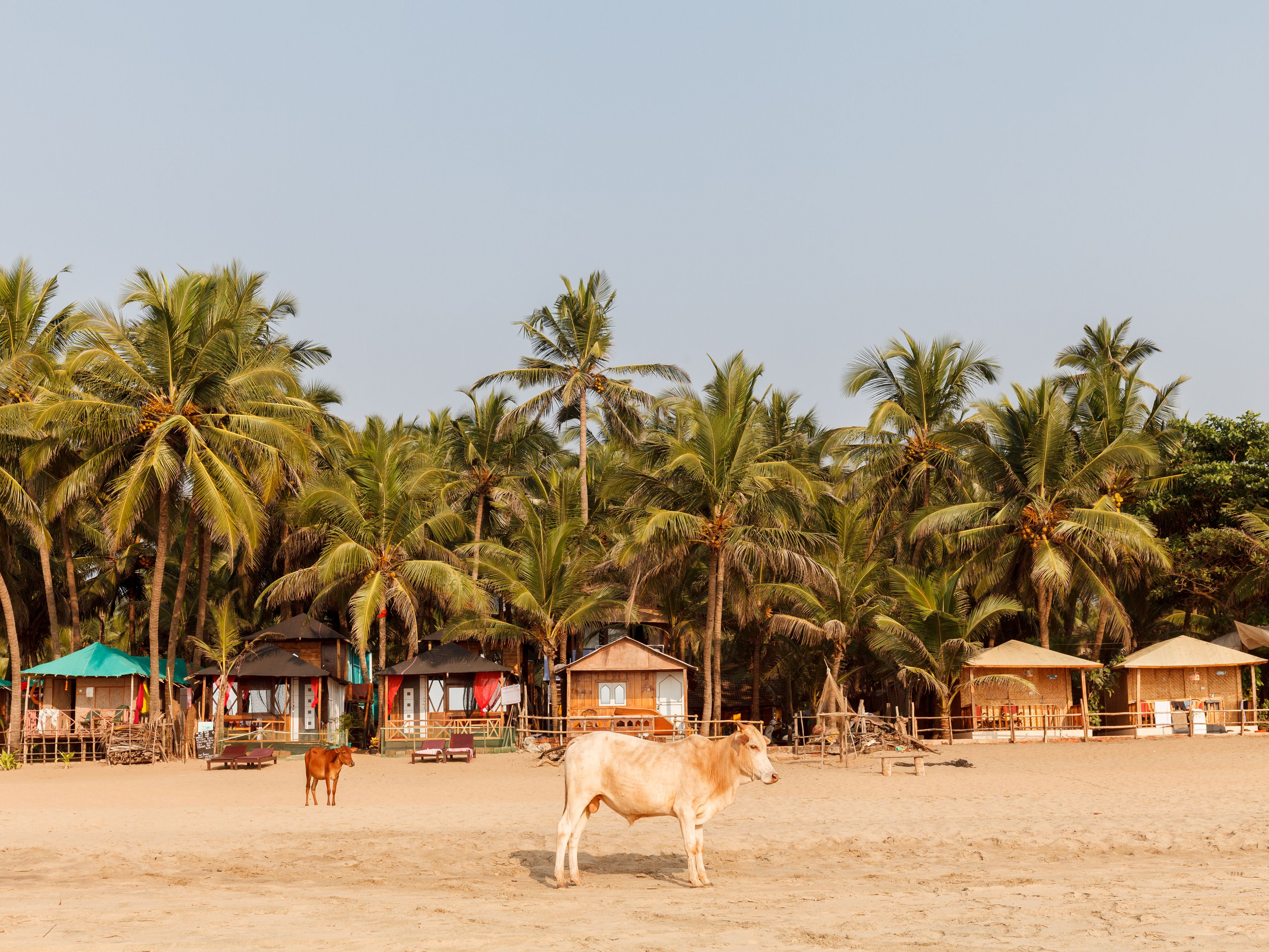 13 Top Beaches in India for 2019