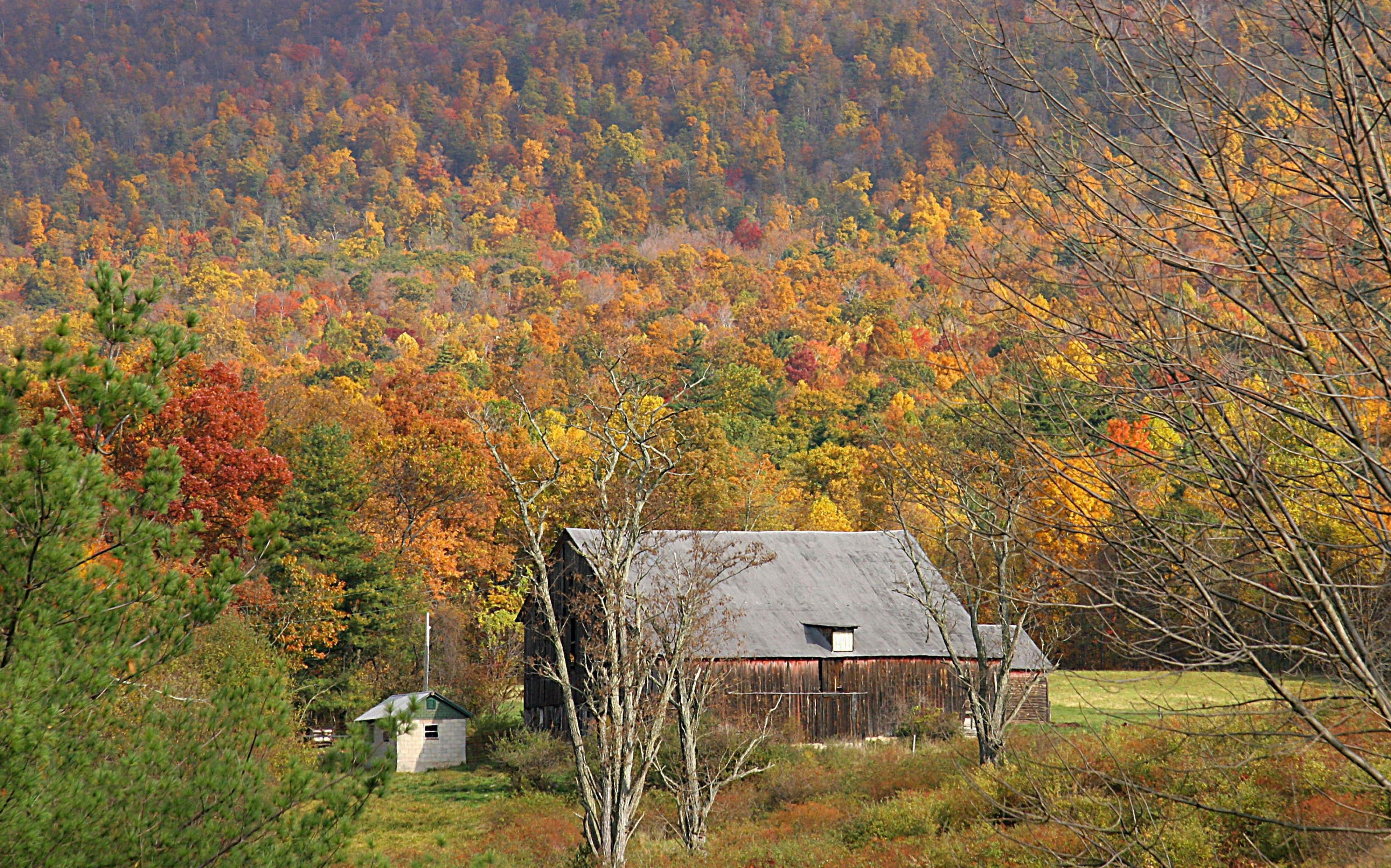 US, Pennsylvania, Bedford County, fall foliage