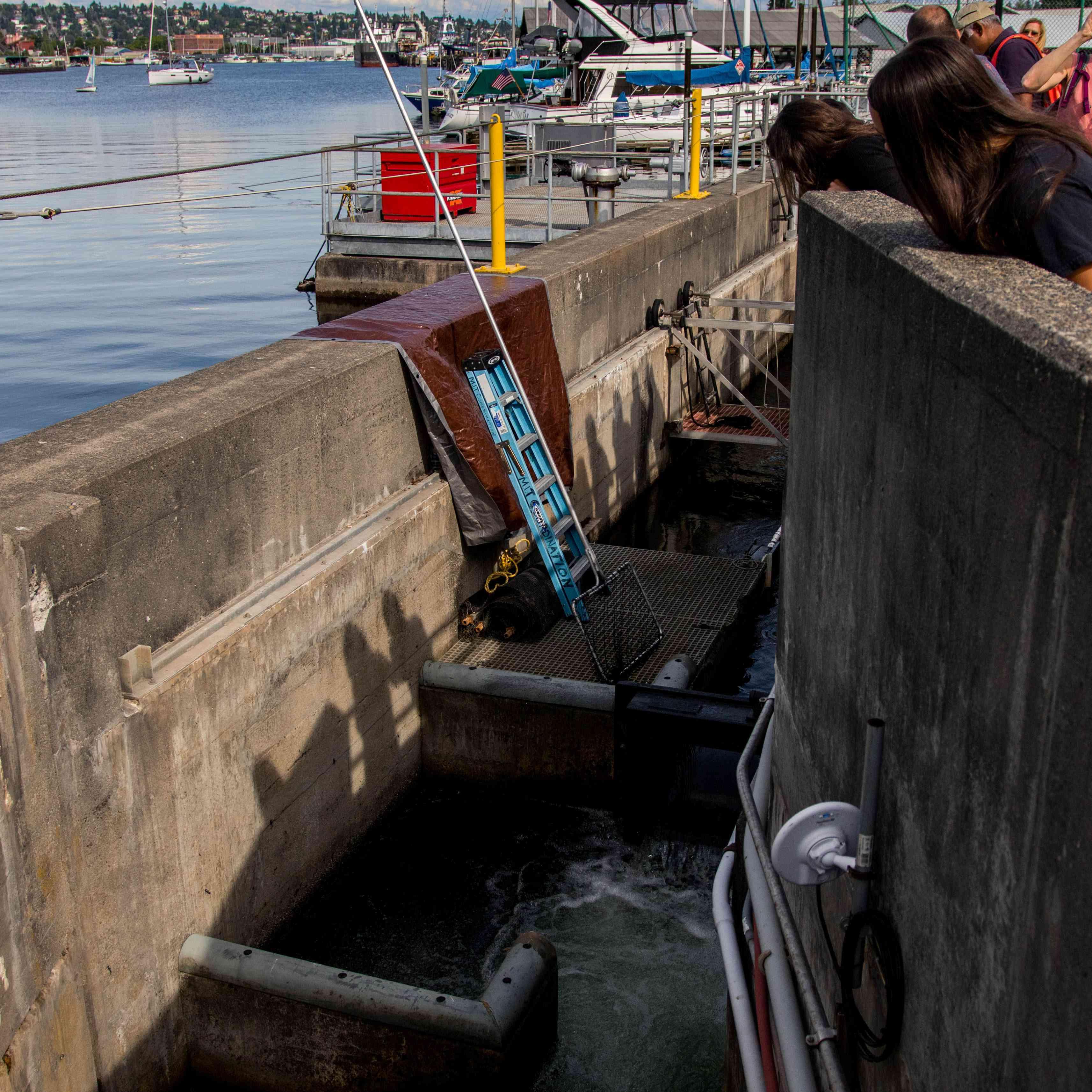 Ballard Locks in Seattle, Washington