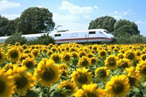 European Train