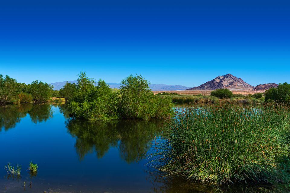 Clark County Wetlands Park