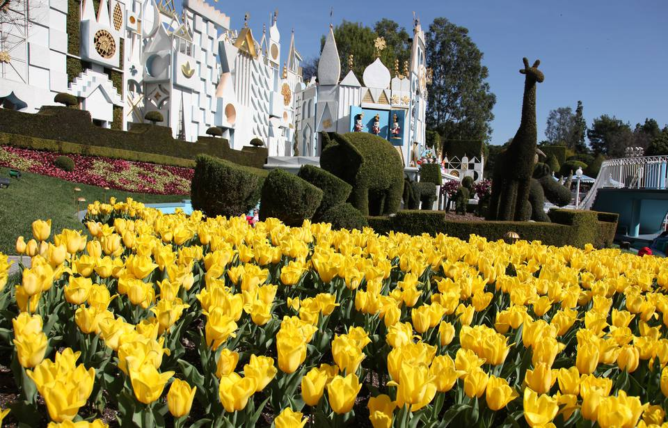 Tulips Blooming at it's a small world