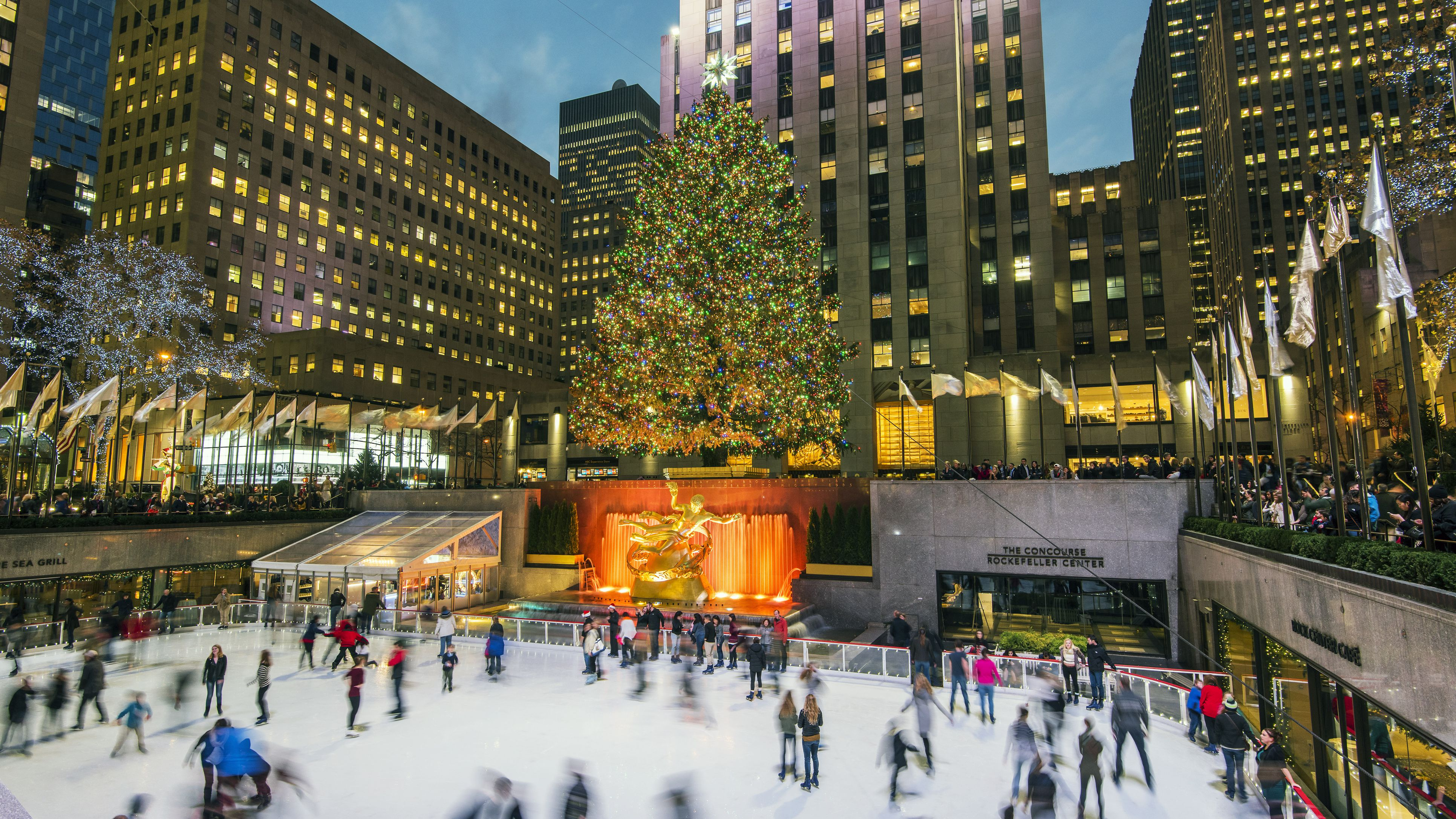Nyc Christmas.Best Christmas Trees To See In Nyc
