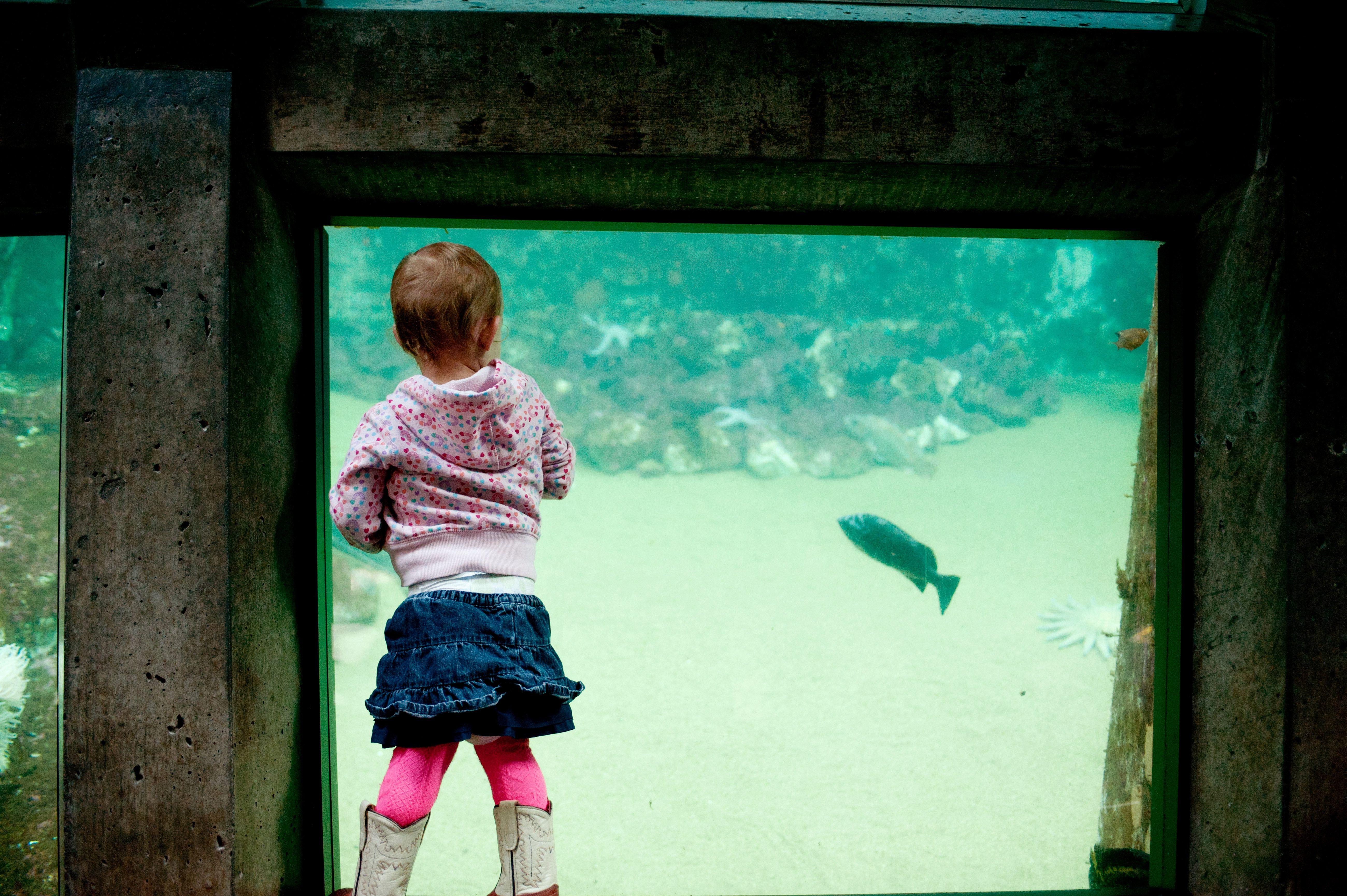 Young girl looking at fish in aquarium