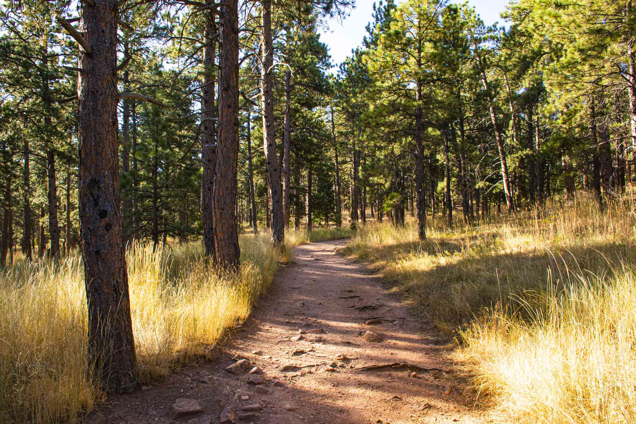 Hiking Trail in Chautauqua Park in Boulder, Colorado