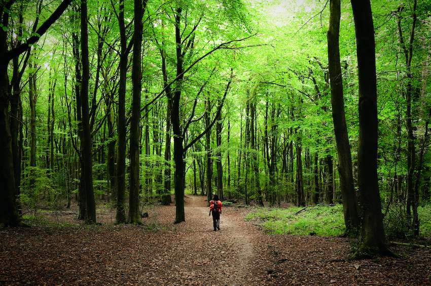 Walking through the beech forests of the Cotswold Way