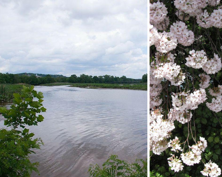 Anacostia-River-Fest.jpg