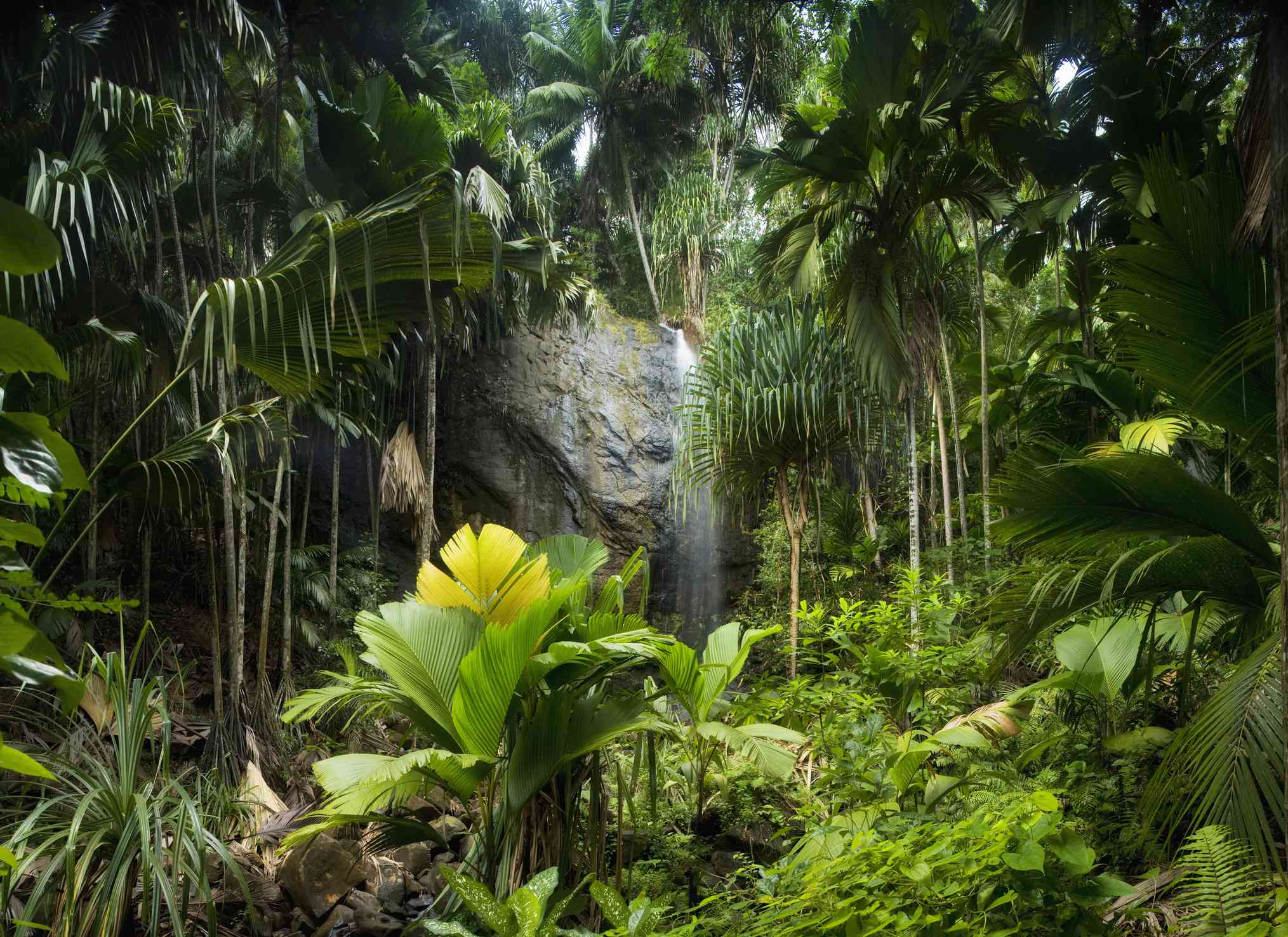 Tropical Rainforest with Waterfall - Vallee de Mai National Park