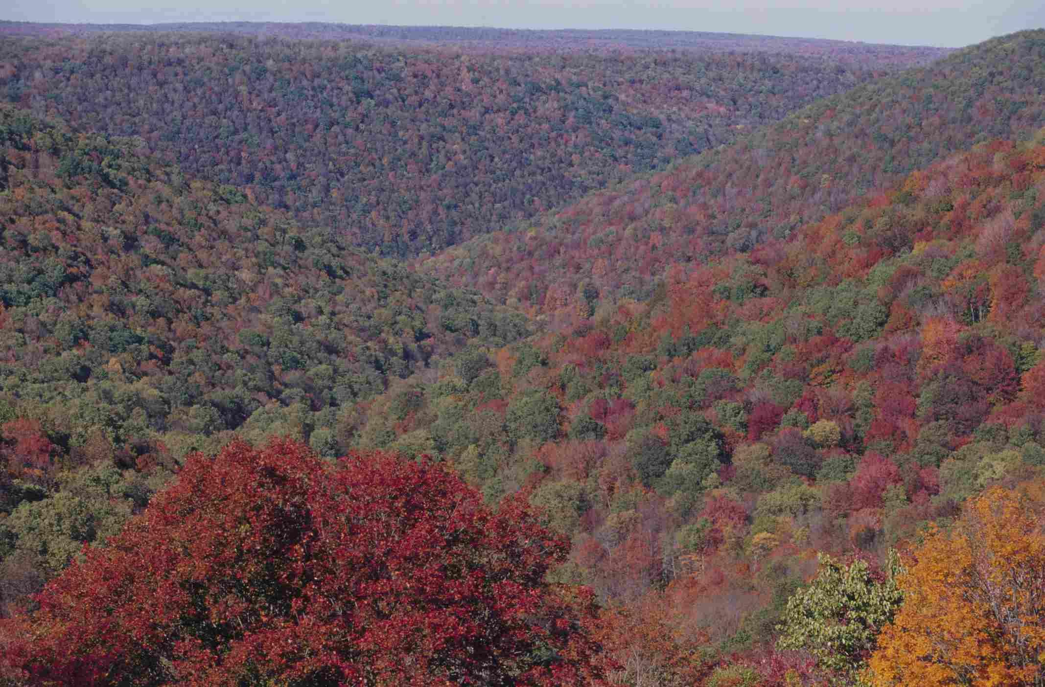 Allegheny Mountains in Autumn