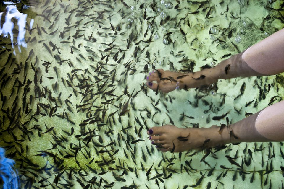 Woman getting a fish pedicure