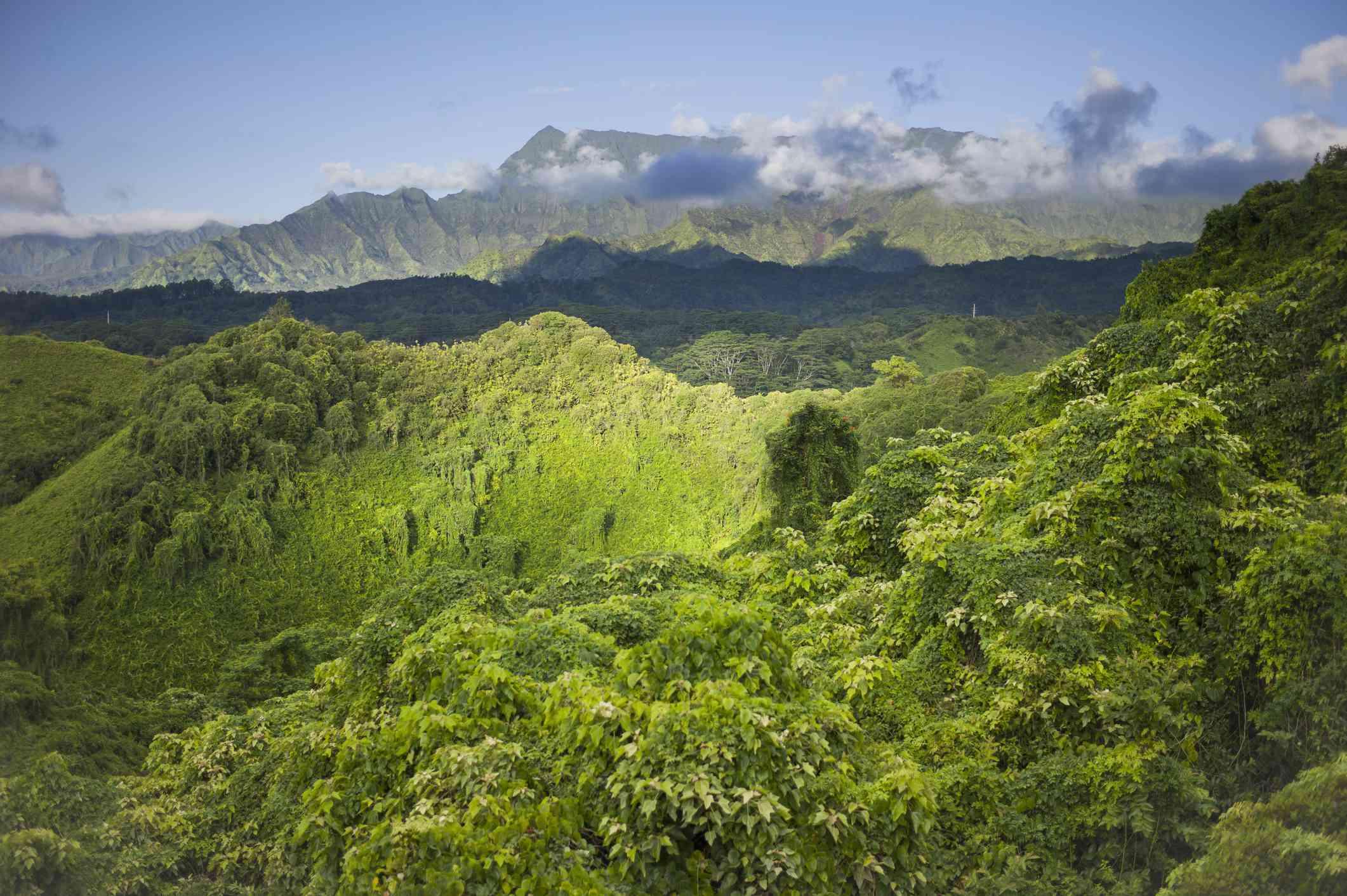 Kuilau Ridge Hiking Trail, Kauai, Hawaii