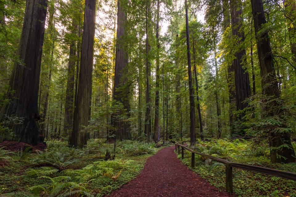 Sendero en el Parque Nacional Redwood