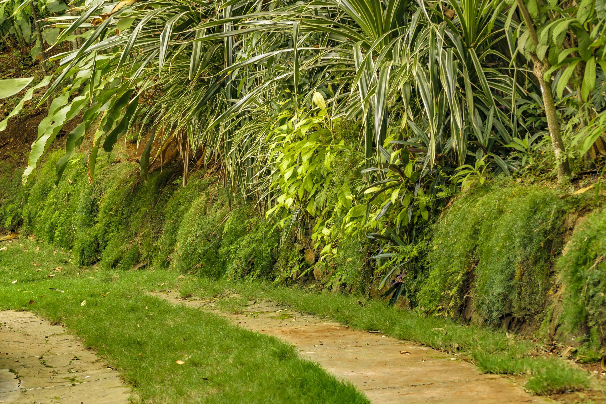 Empty path at the Botanical Gardens in Ecuador